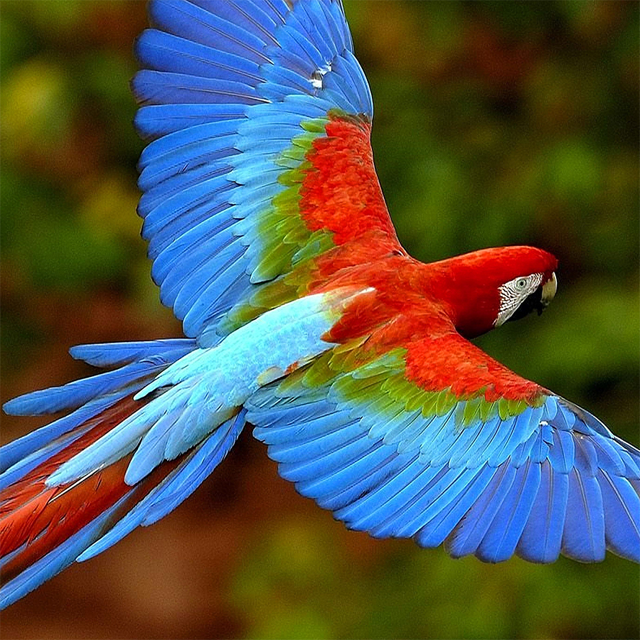 An unoptimised image of a parrot.